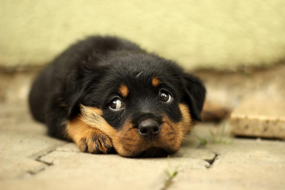 opvoeding pup