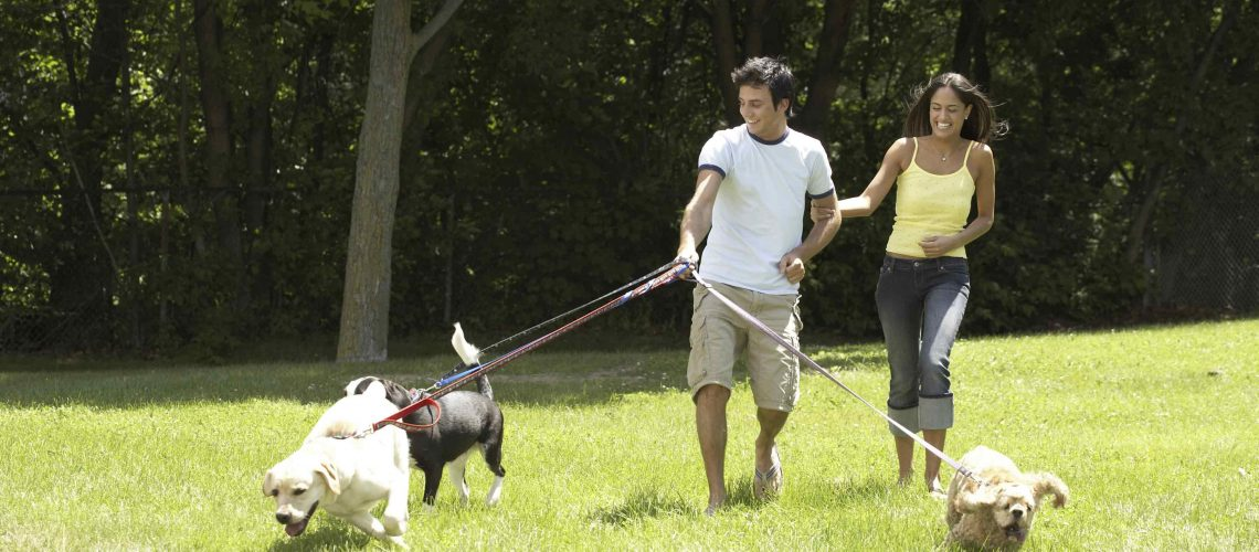 3-dogs-on-leash