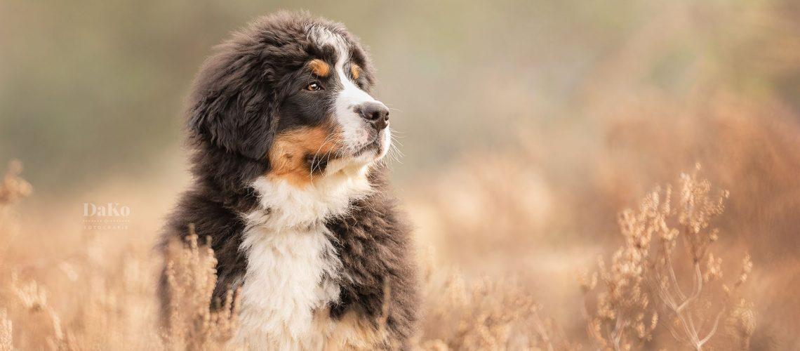 DaKo Fotografie hondenfotograaf Daniëlle Kock