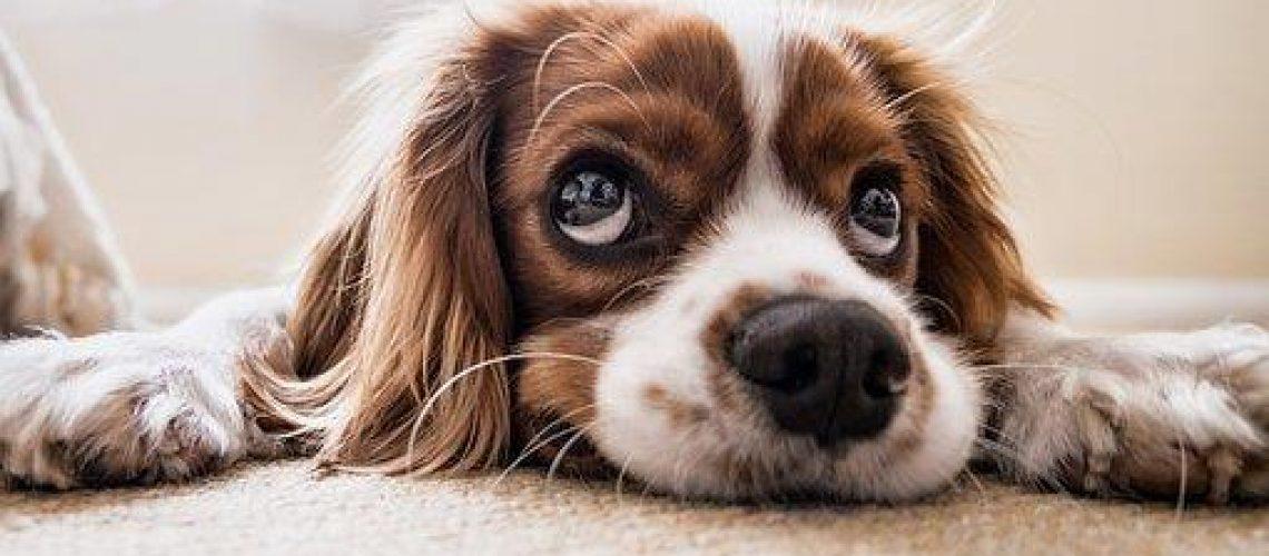 dog-2785074__340 (002)