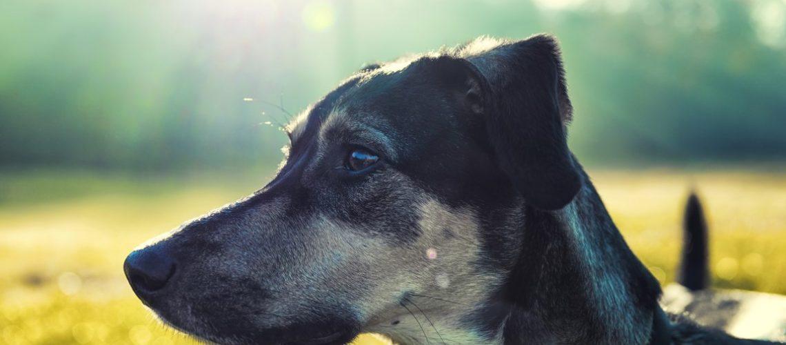 Dog portrait with luminous blurred background