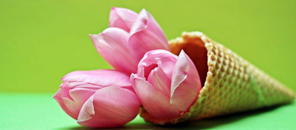 tulips-2148706_1280